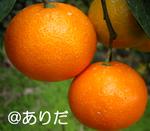 11.9_3.jpg