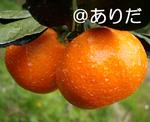 11.9_6.jpg