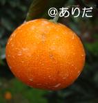 11.9_8.jpg