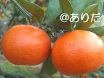 5aea6367.jpg