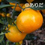 IMGP0597.jpg