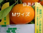 IMGP0848.jpg