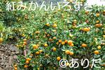 IMGP0852.jpg