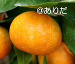 IMGP0861.jpg