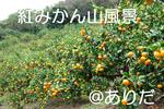 IMGP0870.jpg