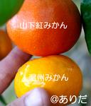 IMGP1082.jpg