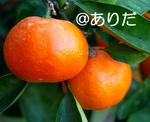 IMGP1095.jpg