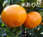 abfd780a.jpg