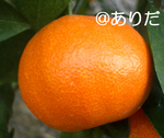 f43d7f15.jpg