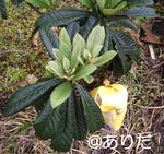 f6c48757.jpg